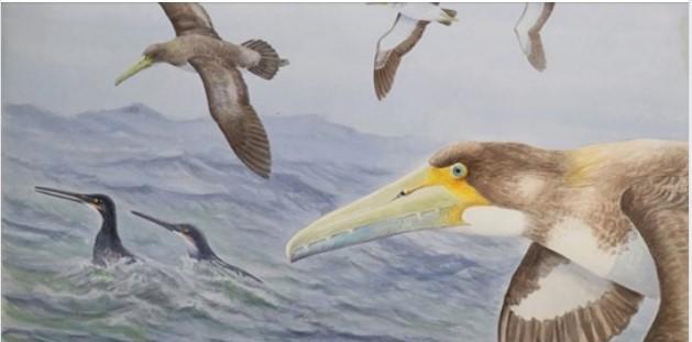 В Новой Зеландии обнаружен предок самых больших древних птиц на Земле